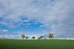 Europa, DEU, Deutschland, Baden-Württemberg, Odenwald, Mosbach-Reichenbuch, Agrarlandschaft, Blauer Himmel, Wolken, Bäume, Obstbäume, Frühling.  Kategorien und Themen, Natur, Umwelt, Landschaft, Jahreszeiten, Stimmungen, Landschaftsfotografie, Landschaften, Landschaftsphoto, Landschaftsphotographie, <br /> <br /> [Fuer die Nutzung gelten die jeweils gueltigen Allgemeinen Liefer-und Geschaeftsbedingungen. Nutzung nur gegen Verwendungsmeldung und Nachweis. Download der AGB unter http://www.image-box.com oder werden auf Anfrage zugesendet. Freigabe ist vorher erforderlich. Jede Nutzung des Fotos ist honorarpflichtig gemaess derzeit gueltiger MFM Liste - Kontakt, Uwe Schmid-Fotografie, Duisburg, Tel. (+49).2065.677997, archiv@image-box.com, www.image-box.com]