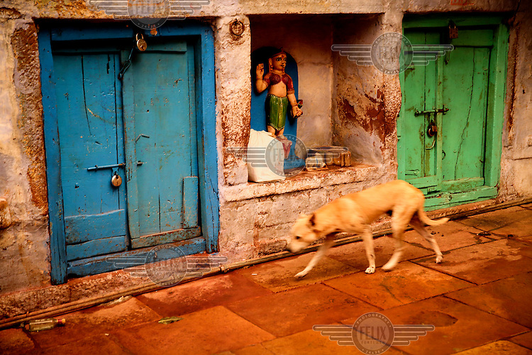A street dog slinks past a shrine in an alleyway.