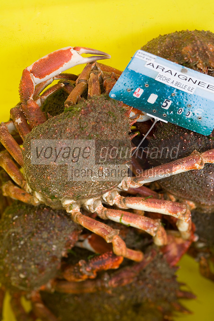 Europe/France/Bretagne/56/Morbihan/Belle-Ile/Le Palais: Détail des étals des femmes des pêcheurs qui vendent la marée du jour - Araignées de mer