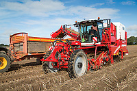 Harvesting Maris Piper potatoes with a Grimme Varitron 220 Platinum - Norfolk, September