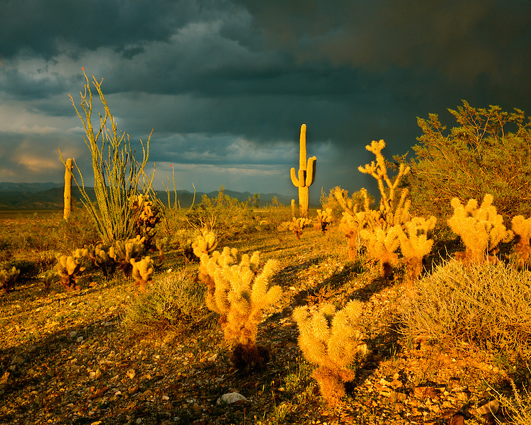 Sunset light breaking through a summer storm in the Harcuvar Mountains; Prescott National Forest, AZ
