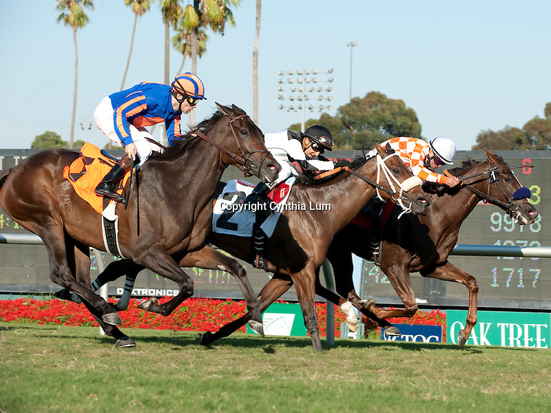 October31, 2010.Briecat riden by Patrick Valenzuela wins The Las Palmas Handicap at Hollywood Park, Inglewood, CA._Cynthia Lum/Eclipse Sportswire.com