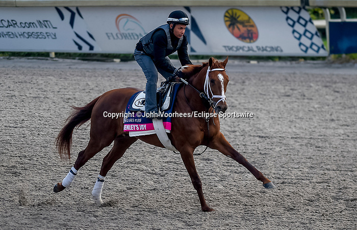 January 23, 2020: Henley's Joy jogs on the main track as horses prepare for the Pegasus World Cup Invitational at Gulfstream Park Race Track in Hallandale Beach, Florida. John Voorhees/Eclipse Sportswire/CSM