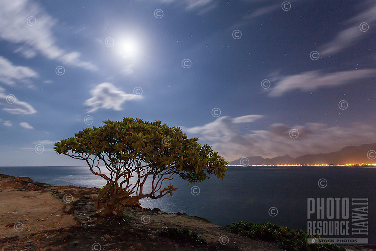 A night scene of a tree at the water's edge under a full moon, La'ie Point, O'ahu.