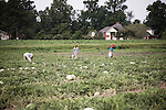 Recolte de pasteques dans un champ de Caroline du Nord par des travailleurs migrants mexicains, juillet 2012. Watermelon harvests in North Carolina, by mexican migrant workers, july 2012.