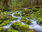 Cascading stream, Olympic National Park, Washington, USA
