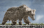 USA, Alaska, Katmai National Park, brown bear (Ursus arctos)