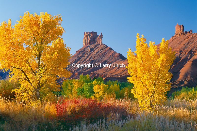 Fremont cottonwoods frame<br /> Priest and Nuns on Castle Rock<br /> Colorado Riverway<br /> Colorado Plateau, Utah