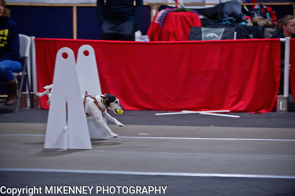 2013 Santa Paws Flyball Tournament held December 7,8 2013 at Boomtowne Canine Campus in Farmington, NY