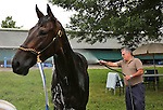 New York Post Columnist John Crudele hoses Mo's In The House, a thoroughbred in the barn of Trainer Chuck Spina at Monmouth Park in Oceanport, New Jersey on Saturday July 9, 2016. Photo By Bill Denver/EQUI-PHOTO