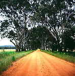 Long orange dirt road lined by gum trees in countryside near the Grampians national park, Victoria, Australia