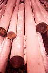 Wooden poles in a pile