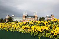 Nederland Amsterdam 2015 09 05.  Ter gelegenheid van de opening van de nieuwe entree van het Van Gogh Museum komt er een labyrint van 125.000 zonnebloemen op het Museumplein. Het labyrint is op 5 en 6 september open voor het publiek. In het labyrint zijn drie Van Gogh inspiratiekamers ingericht.