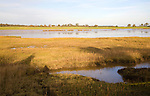 Walberswick National Nature reserve wetland environment marshes Blythburgh, Suffolk, England