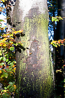 wood, tree, moss