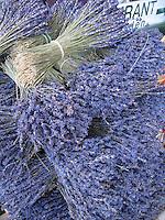 PROVENCE--Lavender de Provence