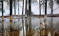 A hot spring reflects the trees and stumps that are in it at Yellowstone National Park,Wyoming