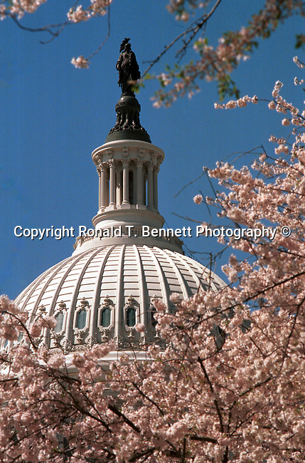 United States Capitol with cherry blossoms in the spring Washington, D.C.,  fine art photography by Ron Bennett (c). Copyright, Fine Art Photography by Ron Bennett, Fine Art, Fine Art photo, Art Photography,