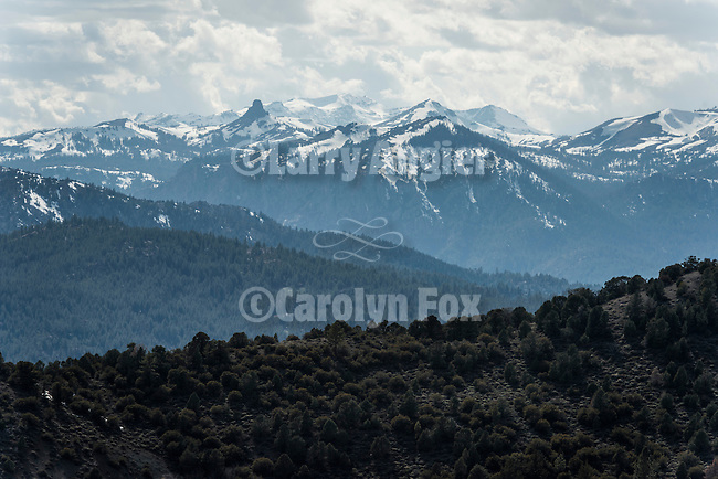 Spring on the eastern slope of the Sierra Nevada, Alpine Co., Calif.