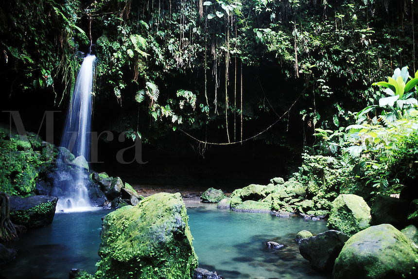Rain forest Emerald Pool at Morne Trois Pitons National Park , Dominica