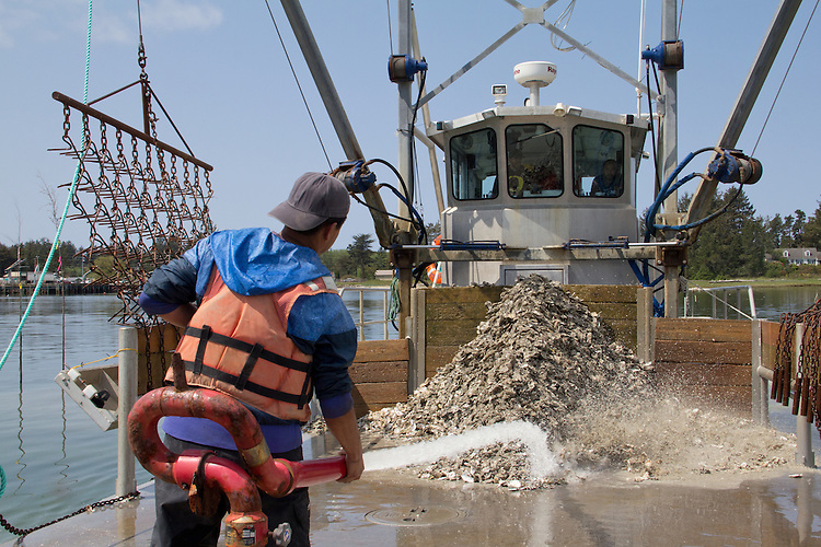 Washington Coast, Ocean Park, Nahcotta, Coast Seafoods, oyster scow, Nahcotta Express, Rene Hernandez, people of the Washington Coast, The Nature Conservancy, Emerald Edge, TNC, commercial oyster farming, Willapa Bay, Pacific County, Southwest Washington, Washington State, Pacific Northwest, USA,