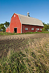 Red wooden barn with white trimmed windows, metal ventilator cupola with weather vane, North Dakota