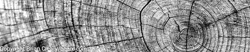 Woodgrain pattern on a sawed off tree limb, Holly Hill, FL.  (Photo by Brian Cleary/www.bcpix.com) 1200x250 pixels and 500x100 pixels available.