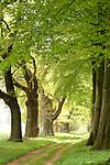 Europa, DEU, Deutschland, Nordrhein Westfalen, NRW, Teutoburger Wald, Oesterholz Haustenbeck, Allee, Baumallee, Fuerstenallee, Weg, Feldweg, Kategorien und Themen, Natur, Umwelt, Landschaft, Jahreszeiten, Stimmungen, Landschaftsfotografie, Landschaften, Landschaftsphoto, Landschaftsphotographie, Tourismus, Touristik, Touristisch, Touristisches, Urlaub, Reisen, Reisen, Ferien, Urlaubsreise, Freizeit, Reise, Reiseziele, Ferienziele....[Fuer die Nutzung gelten die jeweils gueltigen Allgemeinen Liefer-und Geschaeftsbedingungen. Nutzung nur gegen Verwendungsmeldung und Nachweis. Download der AGB unter http://www.image-box.com oder werden auf Anfrage zugesendet. Freigabe ist vorher erforderlich. Jede Nutzung des Fotos ist honorarpflichtig gemaess derzeit gueltiger MFM Liste - Kontakt, Uwe Schmid-Fotografie, Duisburg, Tel. (+49).2065.677997, ..archiv@image-box.com, www.image-box.com]