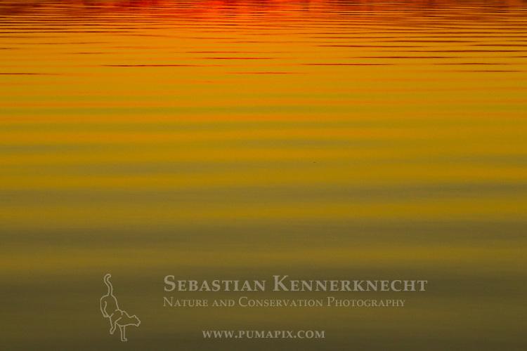 Water pattern at sunset, Ibera Provincial Reserve, Ibera Wetlands, Argentina