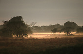 Lulimala, Zambia. Savanna land with sparse trees, early morning mist from the river.