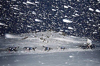Monday  March 8 , 2010   Martin Buser crests the actual summit of Rainy Pass as its snowing and blowing 25 mph on Monday evening
