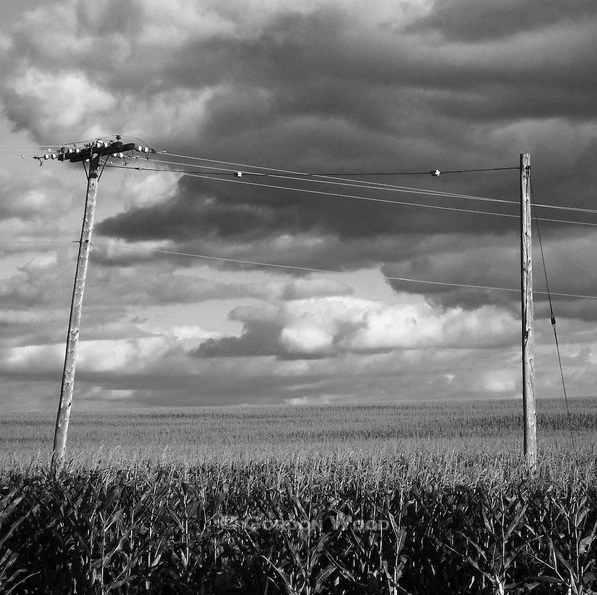 Power Poles Through a Corn Field