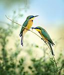 Birds - G