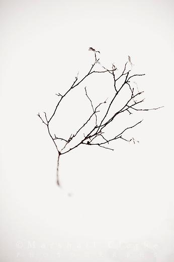 Snow Series Photographs