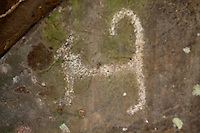 Dog petroglyph, Nuuanu, Honolulu, Oahu, Hawaii