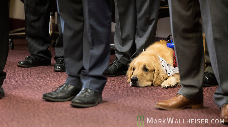 "Former Green Beret Brian Anderson's service dog ""Hero"" lays among the feet of legislators during a press conference on military-friendly legislation at the Florida Capitol."