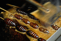 Scorpions, cicadas and silk worm larvae are cooked at Wangfujing snack street in the center of Beijing.  They are fried and eaten dipped in spice. Wangfujing is the main and most popular shoppping street in Beijing.