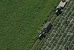 Aerial view of vegetable farm