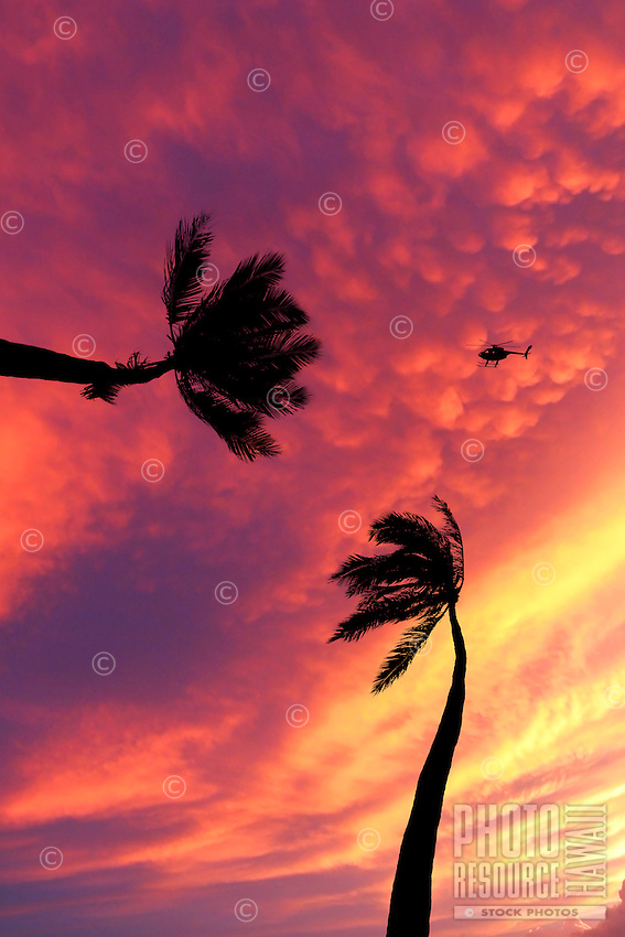 Tour helicopter and palm trees silhouetted at sunset.
