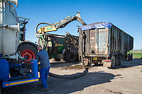 Contractor loading anaerobic digestate to apply to winter wheat - Cambridgeshire, April