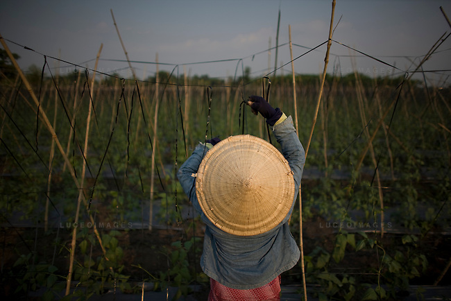Vietnamese women work in the fields outside of Ho Chi Minh City, Vietnam.