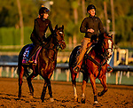 October 30, 2019: Breeders' Cup Juvenile Fillies Turf entrant Shadn, trained by Andrew M. Balding, exercises in preparation for the Breeders' Cup World Championships at Santa Anita Park in Arcadia, California on October 30, 2019. Scott Serio/Eclipse Sportswire/Breeders' Cup/CSM