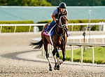 January 24, 2020: True Timber gallops as horses prepare for the Pegasus World Cup Invitational at Gulfstream Park Race Track in Hallandale Beach, Florida. Scott Serio/Eclipse Sportswire/CSM