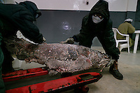 Sea Products moves Octopus, Squid, Cuttlefish to Europe.  Mostly Italy and Greece.  They also have a coelacanths fish in their freezer being held for a museum.  Coelacanths are fossil fish that bridge the gap between fish and mammals.  You can see their fins starting to become legs.