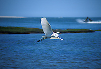 Egret in flight over bay of water.