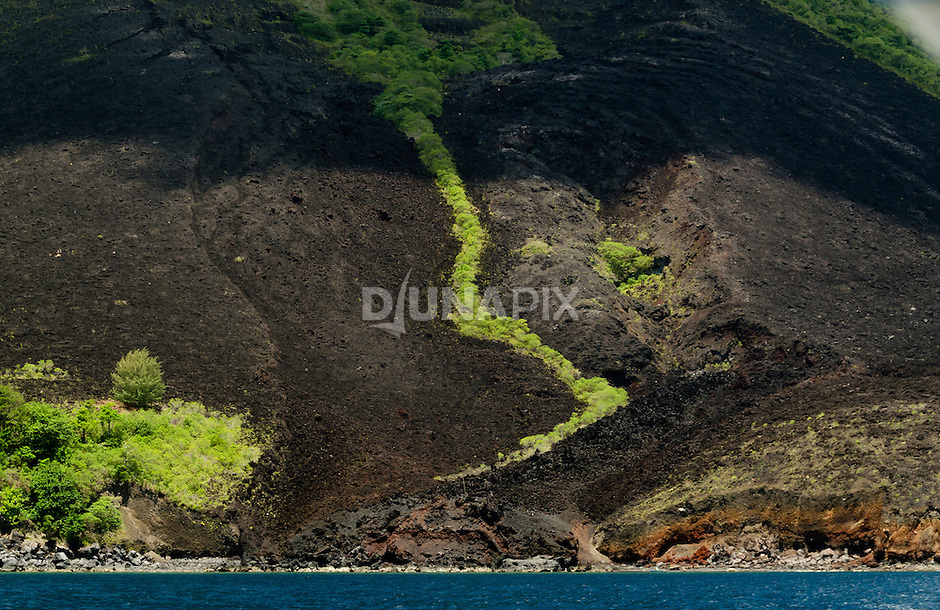 Detail of a fresh lava flow at the toe of Gunung Api volcano. Plant are just beginning to colonize the 1988 eruption.