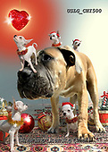 CHIARA,CHRISTMAS ANIMALS, WEIHNACHTEN TIERE, NAVIDAD ANIMALES, paintings+++++,USLGCHI500,#XA# ,funny ,funny