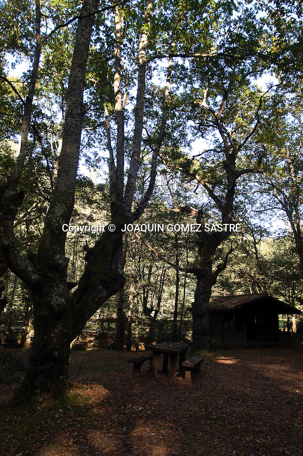 RESERVA NATURAL DEL SAJA.Vista de alguno de los arboles que se pueden ver en la reserva Natural del Saja en Cantabria..foto JOAQUIN GOMEZ SASTRE