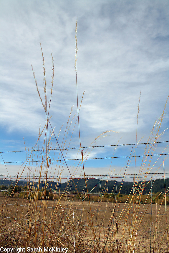 Grasses along a fence beneath dramatic clouds in an October sky along Reynold's Highway outside of Willits in Mendocino County in Northern California.