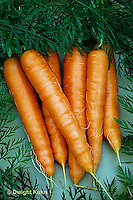 HS12-015x  Carrot - just harvested, Nelson variety